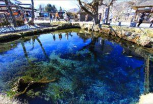 忍野八海-涌池