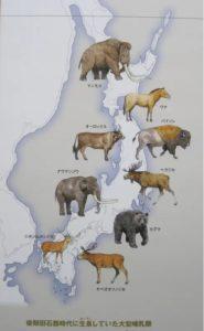 縄文時代までに日本列島に生息していた大型動物