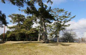 興福寺 西金堂跡