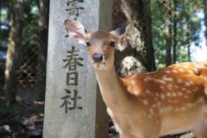春日大社 鹿